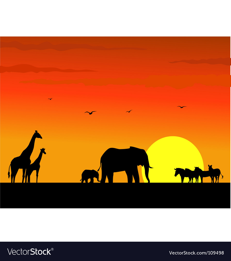 Safari africa vector