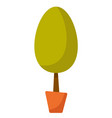 young tree in a pot cartoon vector image