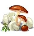 Forest mushrooms and champignons isolated vector image