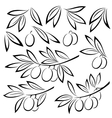 Olive Branches Leaves and Berries vector image