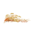 A field of reeds vector image vector image