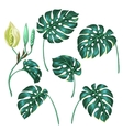 Stylized monstera leaves Decorative image of vector image