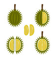 Durian fruit icon in flat style vector image