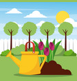 watering planting flowers and filed tree sun vector image