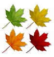 Set of Realistic maple leaves vector image