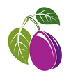 Single purple simple plum with green leaves ripe vector image