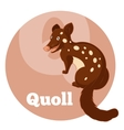 ABC Cartoon Quoll vector image