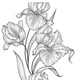 floral seamless pattern flower iris engraving vector image