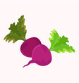 garden radish purple plant with green leaf vector image