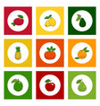 icons tropical fruits on colored background vector image