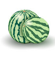 two realistic watermelons from new harvest vector image