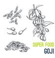Goji super food hand drawn sketch vector image