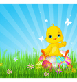 Easter Chick sitting on eggs vector image vector image