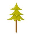 fir tree cartoon vector image