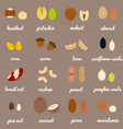 full nuts and seeds icon set vector image