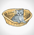 Kitten in Basket vector image