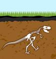 Skeleton of Tyrannosaurus Rex Dinosaur bones in vector image