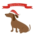 Badger dog vector image
