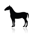 Horse icon with reflection vector image