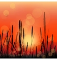 landscape with red sunrise and grass silhouettes vector image