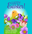 easter greeting poster of chick and flowers vector image