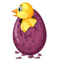 bird comes out of purple egg vector image