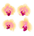 yellow orchid phalaenopsis beautiful flower vector image