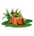 A frog above the stump vector image