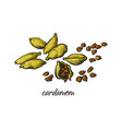pile heap of cardamom cardamon pods and seeds vector image