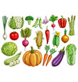 vegetables isolated sketch set with fresh veggies vector image