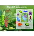 Plant cell components diagram vector image vector image