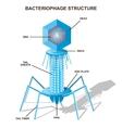 Virus bacteriophage model Isolated vector image