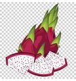 Dragon Fruit Isolated vector image