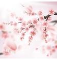 Realistic sakura japan cherry branch EPS 10 vector image