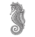Hand drawn graphic ornate seahorse vector image
