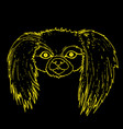 muzzle pekingese dog yellow color outline vector image