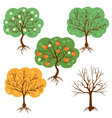 set of a harvest seasons of a tree vector image