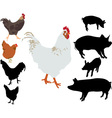 Rooster chiken pigs silhouettes vs vector image
