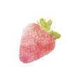 watercolor strawberry fruit on white vector image