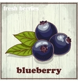Hand drawing of blueberry Fresh vector image