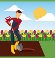 gardener digging a hole with shovel in the garden vector image