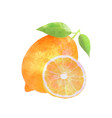 watercolor lemon fruit with leafs on white vector image
