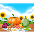 Many vegetables and herbs in the farm vector image