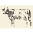 Spotted cow dutch cattle breed hand drawn sketch vector image