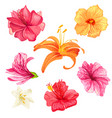 hibiscus and lily flowers vector image