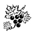 grape branch in black vector image