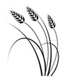 wheat in the wind vector image