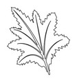 leaf nature plant foliage flora icon vector image