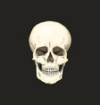 realistic skull with the color of the bone on vector image