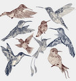 set of detailed hand drawn birds for design vector image